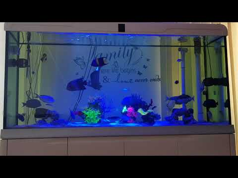 Marine fish tank update London June 2018