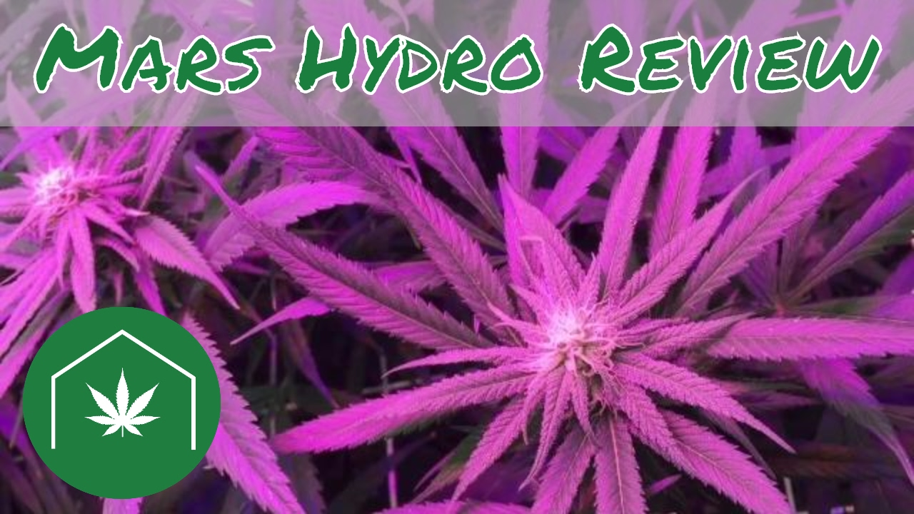 Easily Grow Cannabis At Home: Mars Hydro 300 Watt LED Grow Light Review
