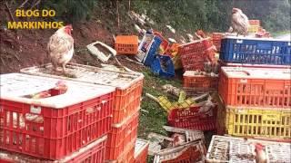 Caminhão carregado de frangos vivos vira a carga na Curva do Shueroff em Manoel Ribas