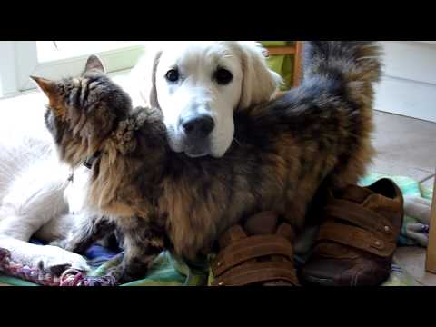 Thumbnail for Cat Video Cat Loves Dog