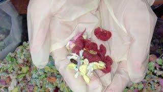 Newborn Baby Mice - The Pinkies