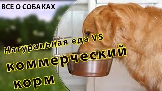 Чем кормить собаку? Натуральная еда vs коммерческий корм.