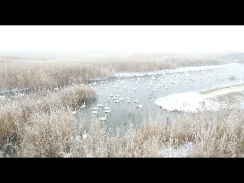 Wetland Park Staff Feeds Migratory Birds in Harsh Winter