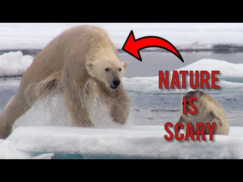 NATURE IS SCARY | Scary Moments In Nature Compilation
