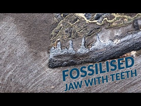 Fish Jaws! 190 Million Years Old