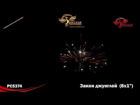Смотреть фото РС5374: Закон джунглей. новости россия москва