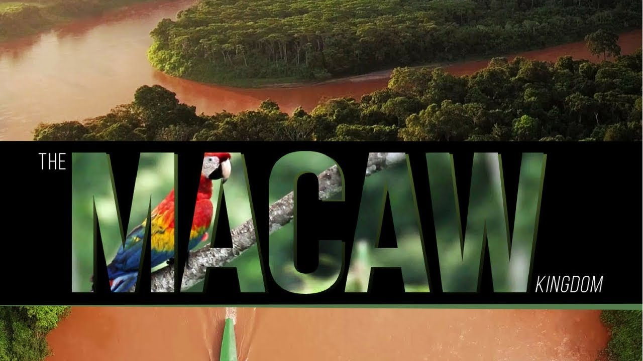 Macaw Kingdom – Wildlife Messengers