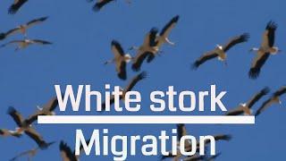 Bird Migration above Israel - Autumn 2011