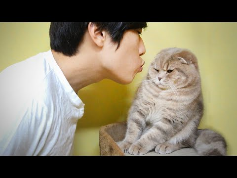Thumbnail for Cat Video Kissing a Cat