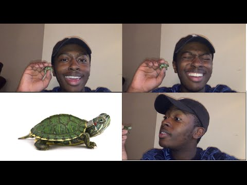 Unboxing my new pet turtle (red eared slider) || JBNetwork