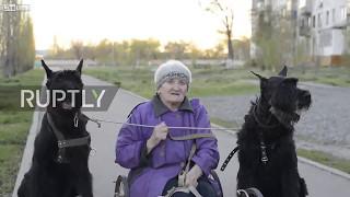 [VIDEO] Chuyện lạ: Người phụ nữ 79 tuổi huấn luyện chó kéo xe