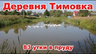 Деревня Тимовка. Домашние утки и пруд.