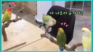 """모란앵무 """"초트""""는 인기쟁이 앵무새?"""