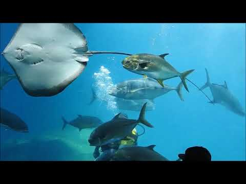 uShaka Marine Park: Durban