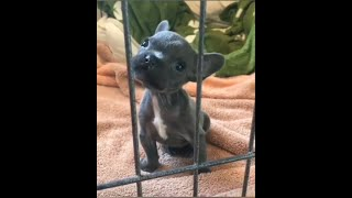 TikTok Pets:Cute and Funny Animals Pets Compilation