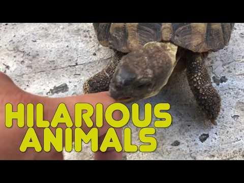 Hilarious Animals    Funny Animal Videos