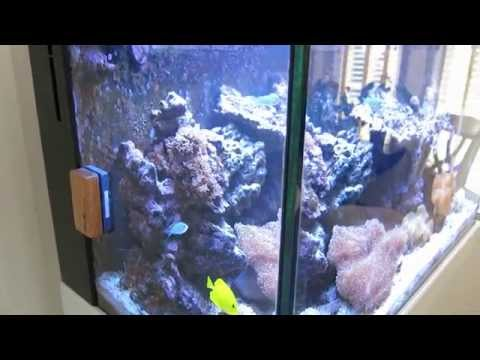 Red Sea Max C-250 Reef Aquarium - Part 10 - Final Report After 1 Year.