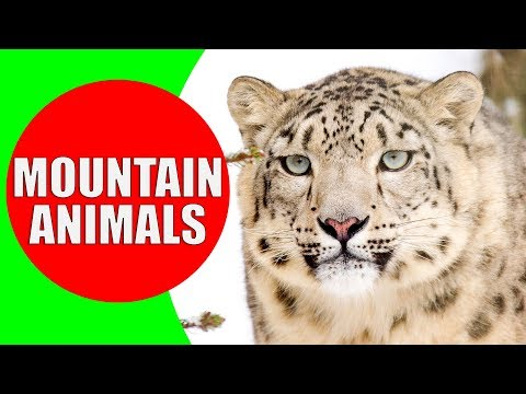 MOUNTAIN ANIMALS Names And Sounds For Kids To Learn | Learning Mountain Animals For Children