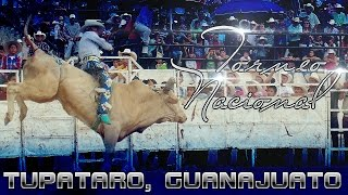 Torneo De Toros De Reparo En Tupataro, Guanajuato 2014