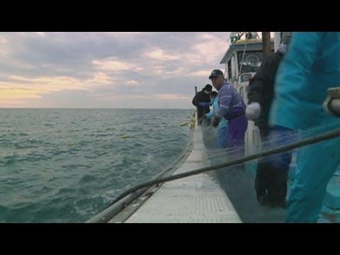 Highly Radioactive Fish Caught Off Fukushima Coast