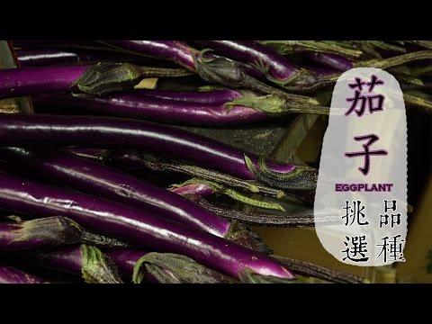 【春】茄子的挑選方法