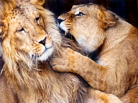 5 Days Tanzania Safari Camping Joining Others Tarangire Serengeti Ngorongoro $900.-USD