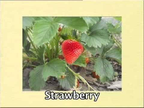Fruite Development and Maturation