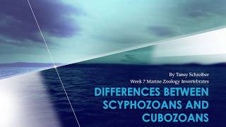 Scyphozoans & Cubozoans:  Differences & Similarities