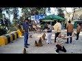 Beautiful Nathia Gali  Fun Time with Monkeys   BZU Employees Trip To Galyat Murree Nathia Gali.