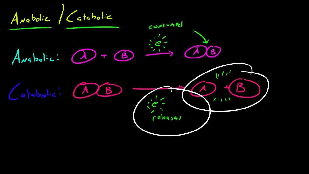 catabolic vs anabolic metabolism