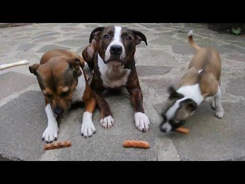 Funny Dog Thief | Dog Sausage Treats Stolen