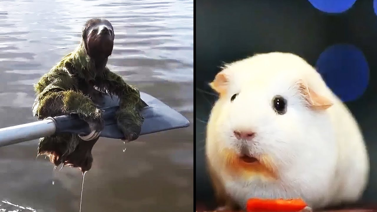 Ozzy Man Reviews: Animals Relaxing #3