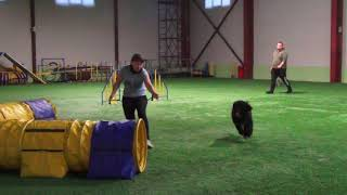 D0 -1_Large Михайлова Надежда & Португальская водяная собака ИСКРИСТЫЙ ИНЕЙ ЖАР-ПТИЦА