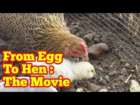 From Egg to Hen: The Movie
