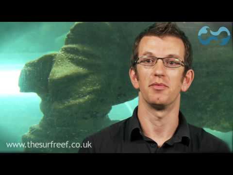 Marine Life on the artificial surf reef -  www.thesurfreef.co.uk