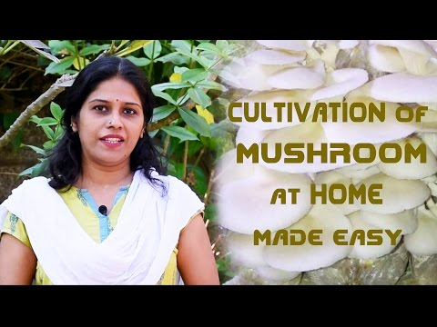 How To Grow Mushrooms At Your Own Homes Easily [Subtitled]