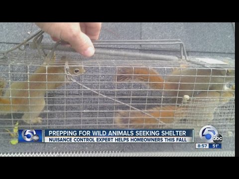 Cold weather may send wild animals into your home seeking shelter