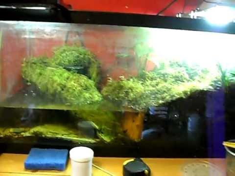 Tiger Salamander Tank Update