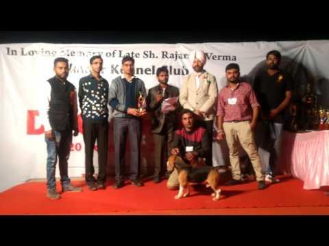 Bikaner Pet Show   Best in Show Awards   www.dogs99.com