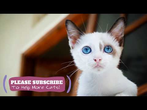Almost 2 Hours Relaxing Music For Cats, Instant Feline Relaxation Music - Makes Cats Go to Sleep LCZ