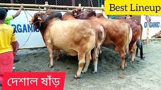 194 |ফিরে দেখা ২০১৮ | Bulls Of Traditional ZinZira Haat | Old Dhaka | ZbGh 2019