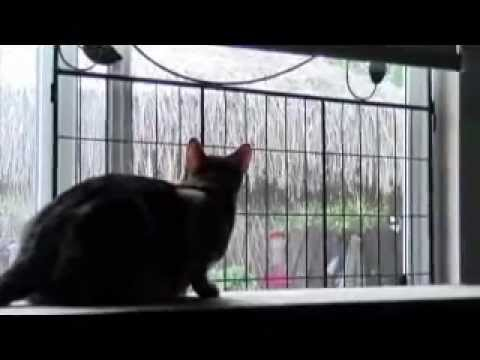 Cat Window Screen Protection Quick Fix Solution