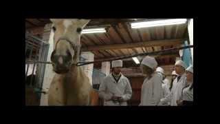 видео ветеринарный врач