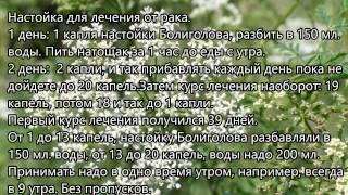 видео Болиголов при раке: применение и отзывы