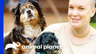 Mr. Rags & Mcgee Find Their Forever Homes   Amanda To The Rescue