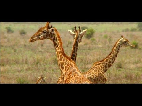 KUTOKA MBUGA ZA WANYAMA: VIVUTIO VYA UTALII TANZANIA