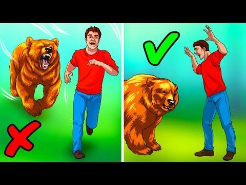 Что делать, если вы встретили медведя