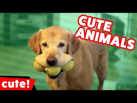 Funniest Cute Pet Moments & Reactions of 2016 Weekly Compilation | Kyoot Animals