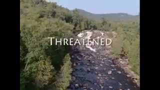The Endangered Species Act and COSSARO | Loi sur les espèces en voie de disparition et COSSARO