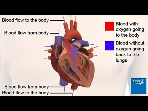 How Your Heart Works Structure And Function Youtube